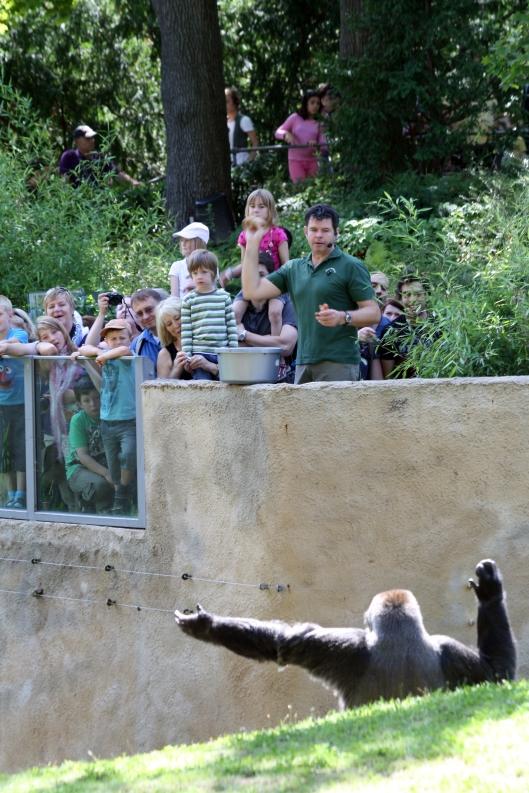 Gorillafütterung 5